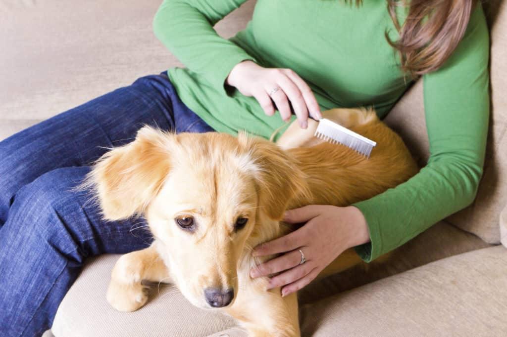 mujer peinando a su perro con un peine para perros
