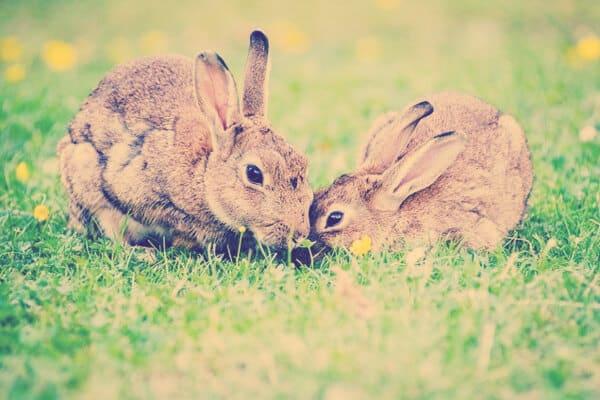 conejos contentos